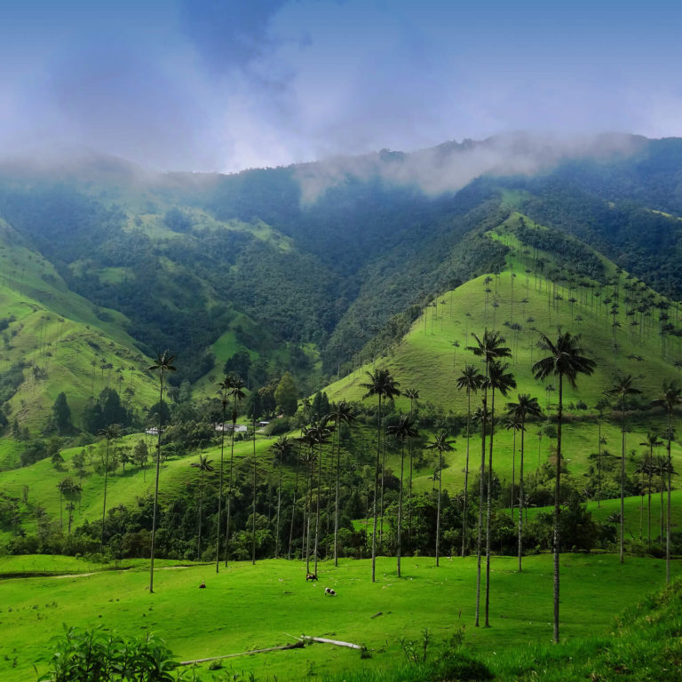 View of palms and clouds in Cocora National Park during private Colombia tour
