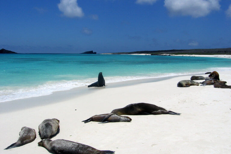 Seals on the beach in the Galapagos Islands, during luxury Ecuador trip