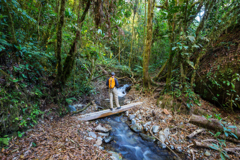 Man on private guided hike in Costa Rica rainforest during luxury costa rica trip