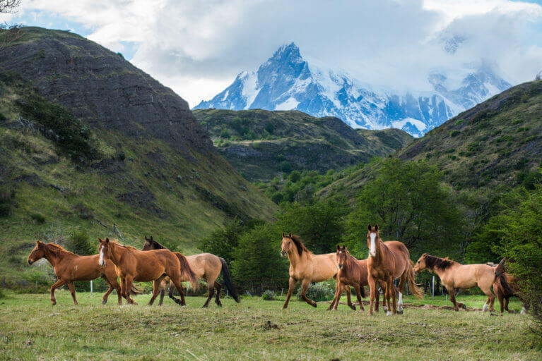 Wild horses against dramatic mountain backdrop and moody skies in Patagonia