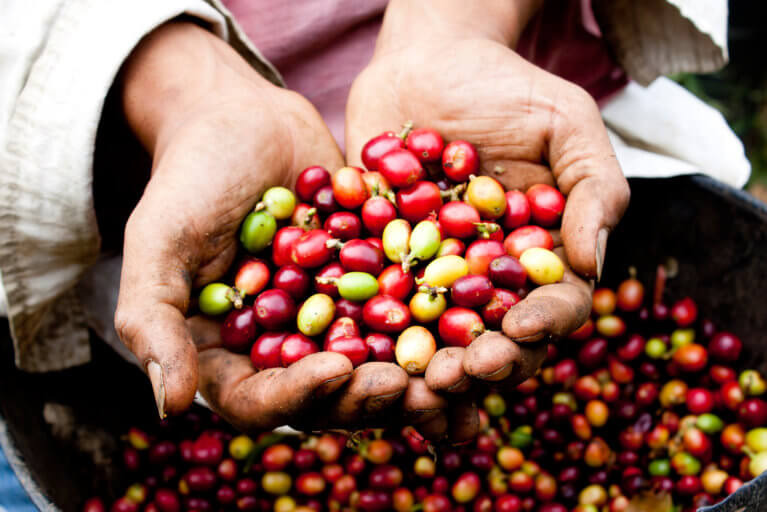 Close up of Colombian coffee beans in hands during private tour of Coffee Region