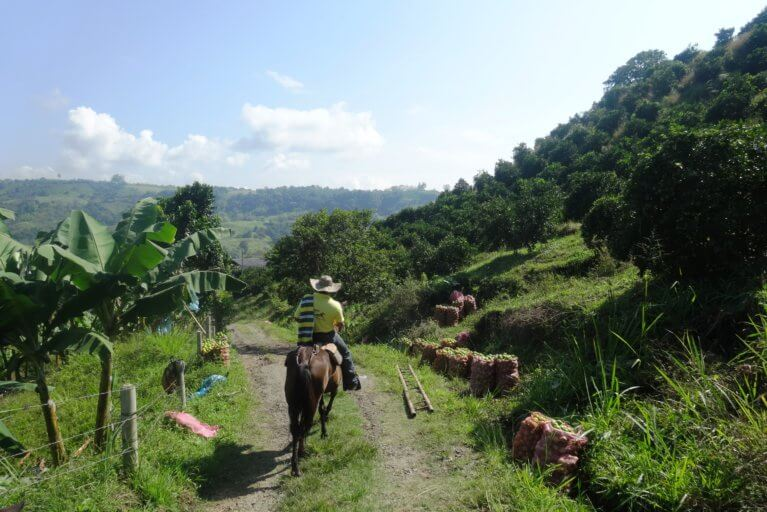 Private horseback riding tour in Colombia's Coffee Region
