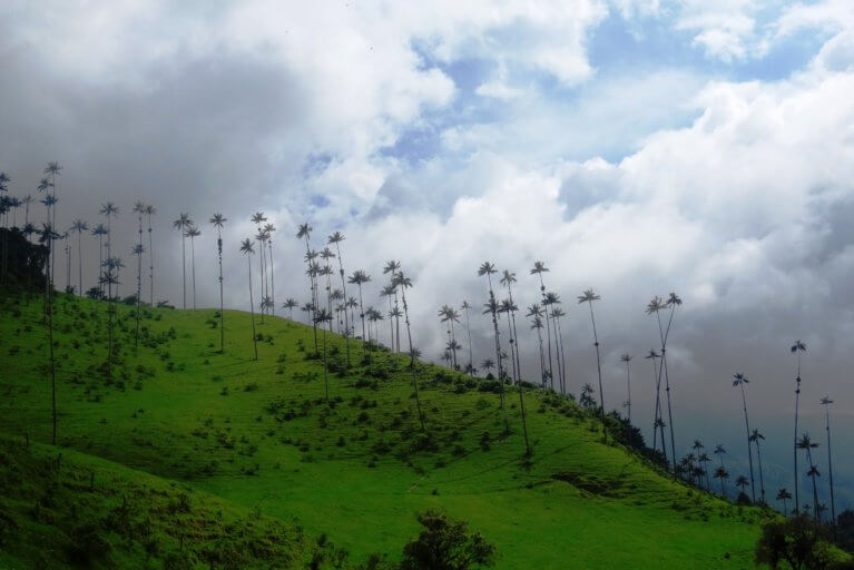 Palms and cloud forest in the Cocora valley during a luxury trip to Colombia