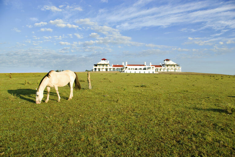 Horse grazing on grass at Estancia Vik in Uruguay