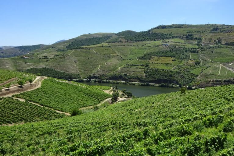 Douro Valley vineyard views on a private Portugal tour