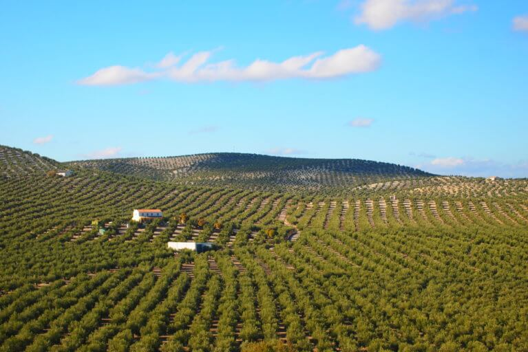 View of natural green landscape of a private olive oil estate on a sunny day during a luxury Spain tour