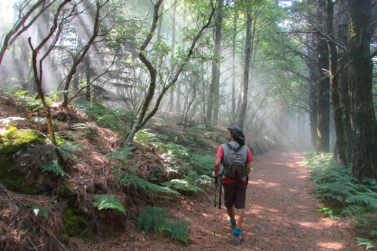 Private guide on a hiking tour surrounded by trees and light in Aeolian Islands during luxury Sicily trip