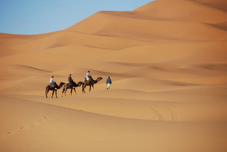 Man leading camels on sand dunes in the Sahara desert during a luxury Morocco tour