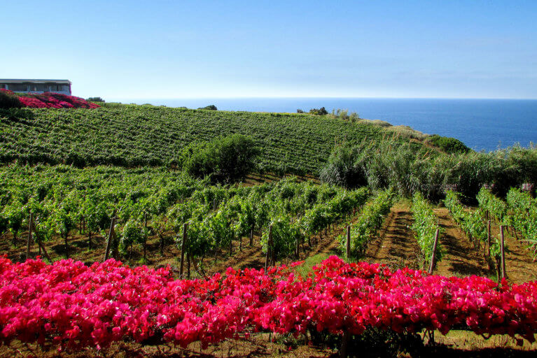 Capofaro vineyards and sea views in Salina during luxury Sicily trip