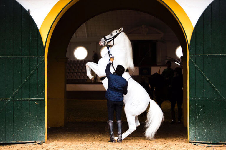 Man and horse at Royal Andalusian School of Equestrian Art in Jerez de la Frontera during an exclusive Spain tour