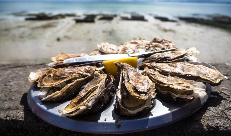Private oyster tasting during luxury Croatia trip