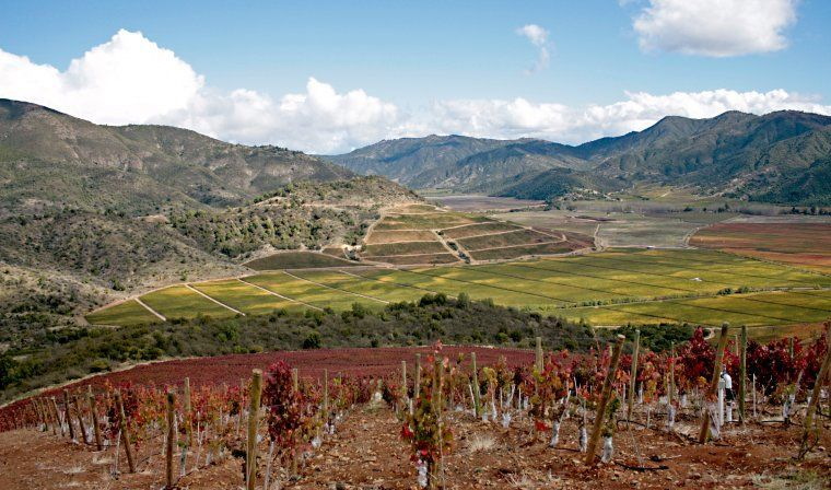 Chilean vineyards during luxury Chile tour